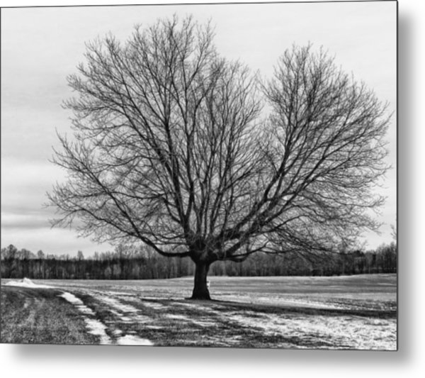 Winter Tree Metal Print by Susan Desmore
