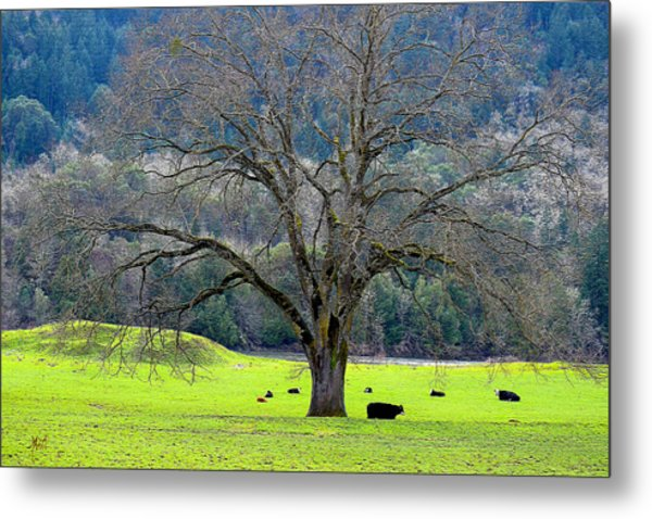 Winter Tree With Cows By The Umpqua River Metal Print