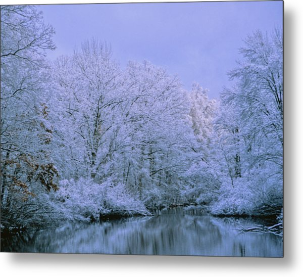 Winter Trees Metal Print by Carolyn Smith