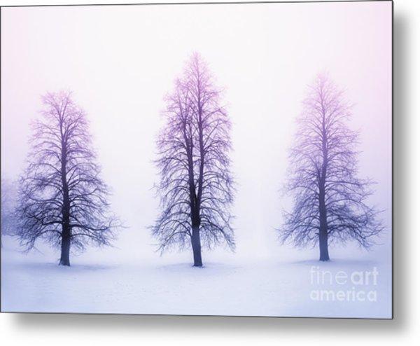 Winter Trees In Fog At Sunrise Metal Print