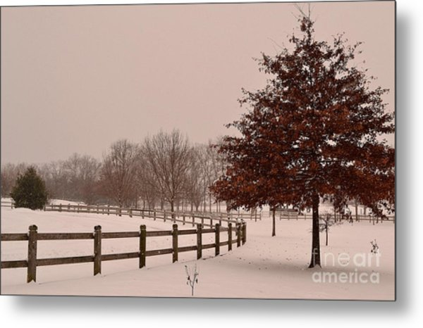 Winter Trees In Park Metal Print
