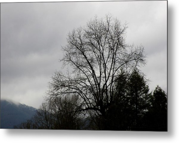 Winter Trees Number Four Metal Print