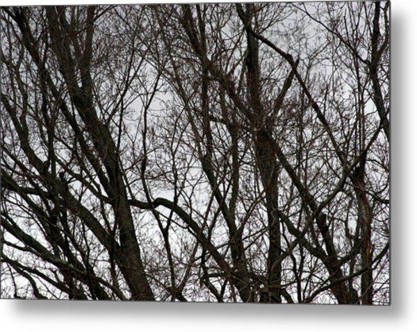 Winter Trees Number One Metal Print