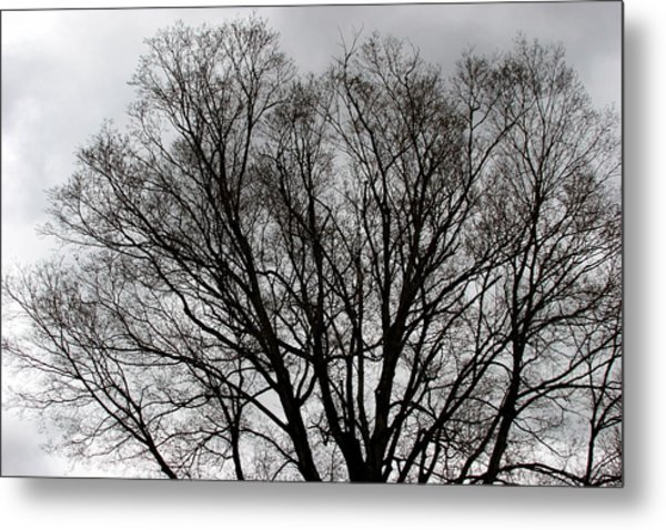 Winter Trees Number Two Metal Print