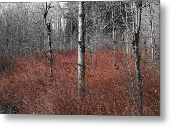 Winter Wetland Metal Print