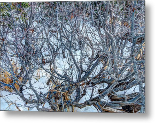 Winter Willow Metal Print