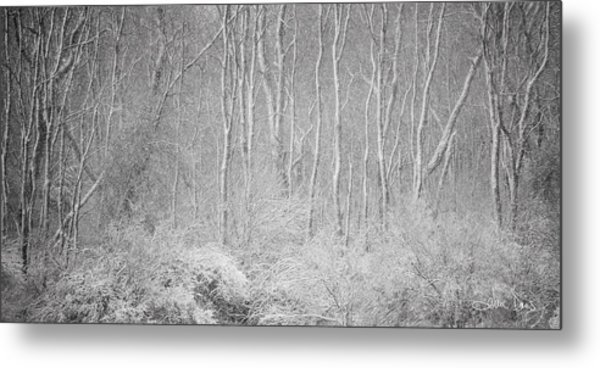 Winter Wood 2013 Metal Print