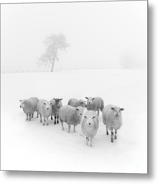 Winter Woollies Metal Print