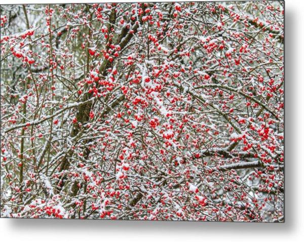 Winterberry During A Snowfall Metal Print