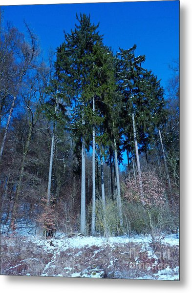 Winterforest Metal Print