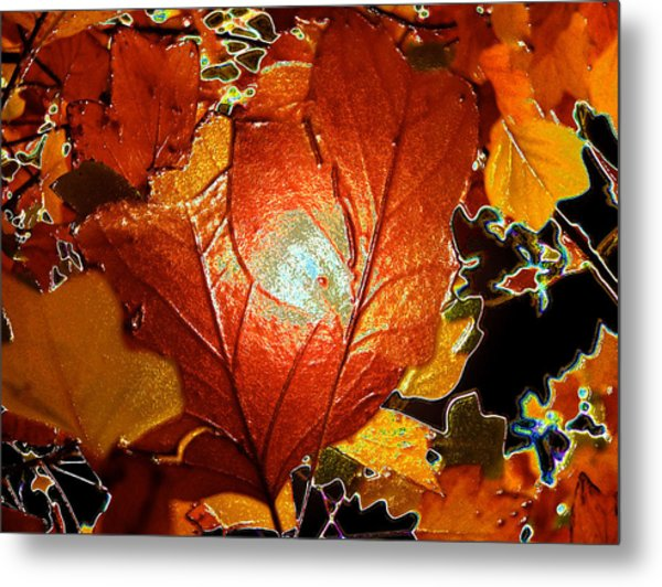 winters autumn in Pasadena Metal Print