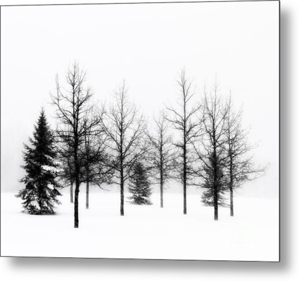 Winter's Bareness II Metal Print