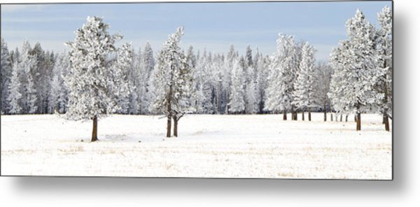 Winter's Coat Metal Print