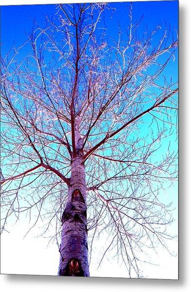 Winters Freeze Metal Print by Sharon Costa