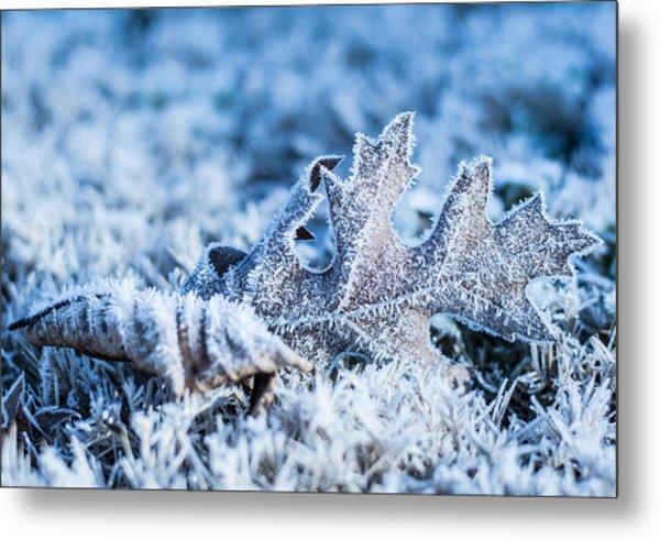 Winter's Icy Grip Metal Print