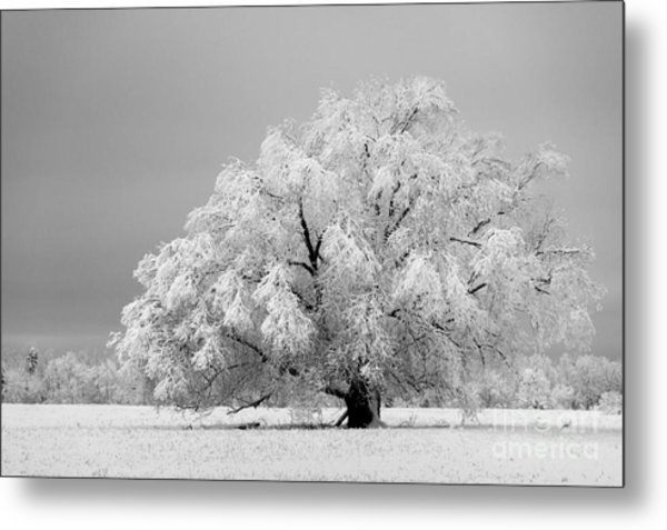 Winter's Majesty II Metal Print