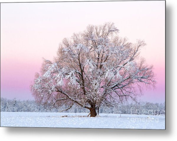 Winter's Majesty Morning Metal Print