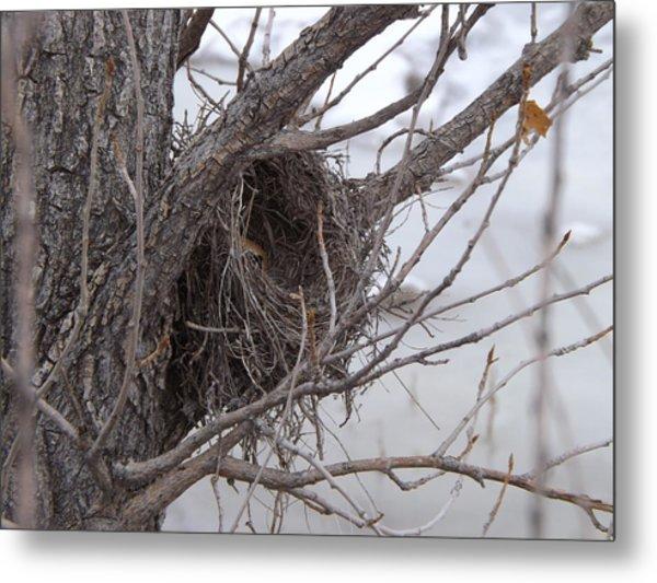 Winter's Nest Metal Print