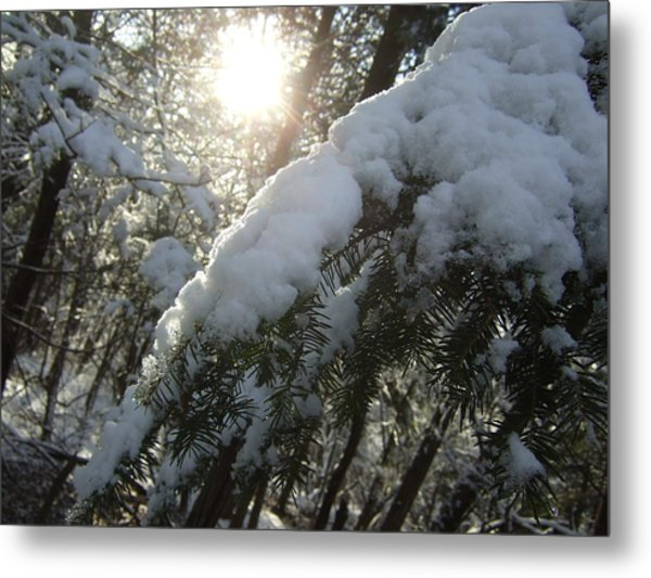 Winter's Paw Metal Print
