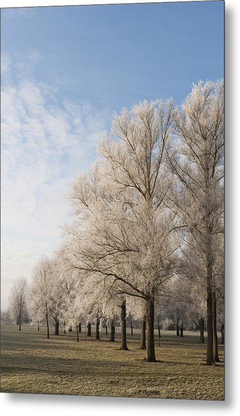 Winter's Trees Metal Print