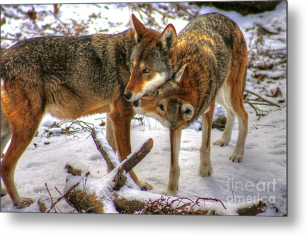 Winter's Warmth Metal Print by Steve Ratliff