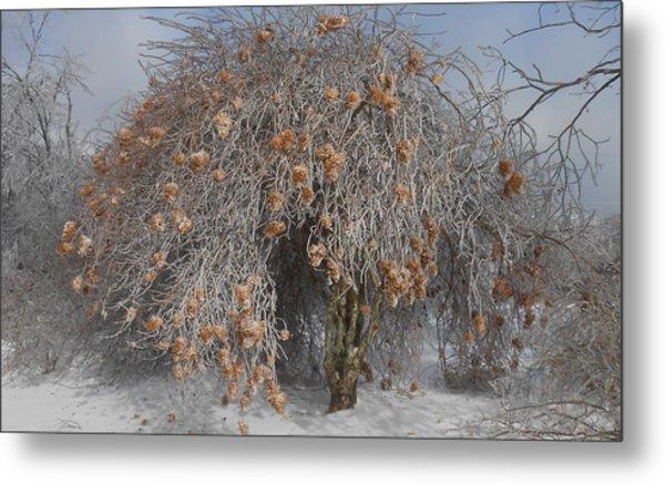Wintertime Snowball Bush Tree Metal Print