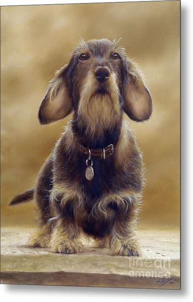 Wire Haired Dachshund Metal Print