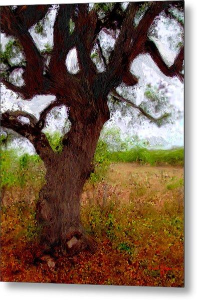 Da214 Wise Old Tree By Daniel Adams Metal Print