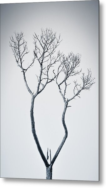 Wishbone Tree Metal Print