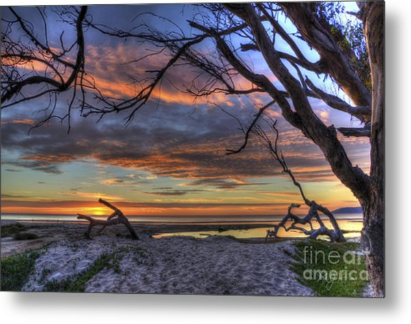 Wishing Branch Sunset Metal Print