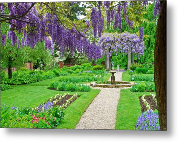 Metal Print featuring the photograph Wisteria Bloom by Michael Hubley