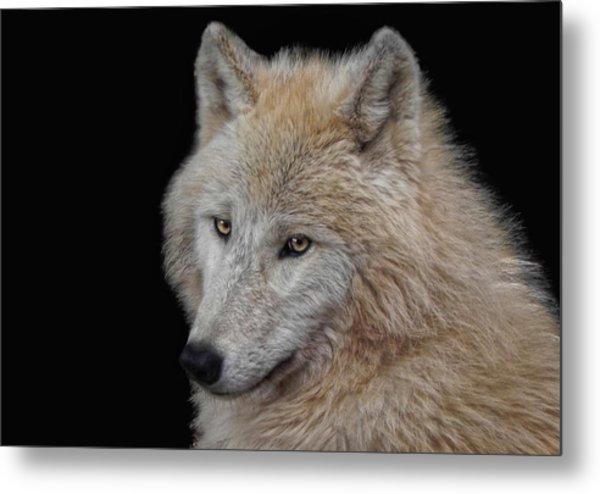 Wolf Bride Metal Print