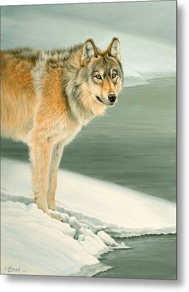 Wolf Portrait-lamar Valley  Metal Print