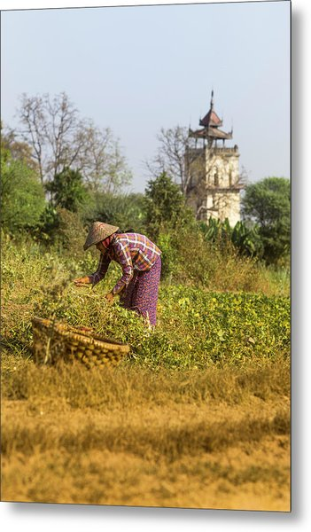 Woman Weeding At Nanmyin Tower Metal Print