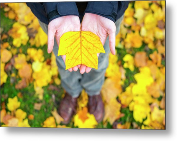 Womans Hands Holding A Yellow Leaf Metal Print