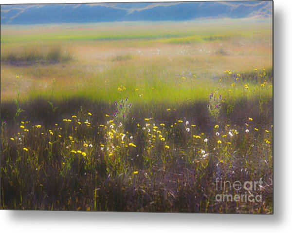 Wonderland 4 The Plains Metal Print