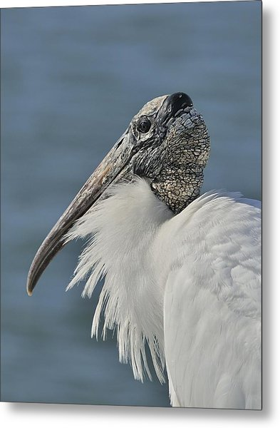 Wood Stork Portrait Metal Print