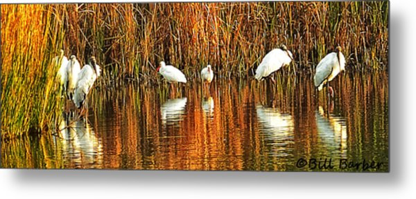 Wood Storks And 2 Ibis Metal Print
