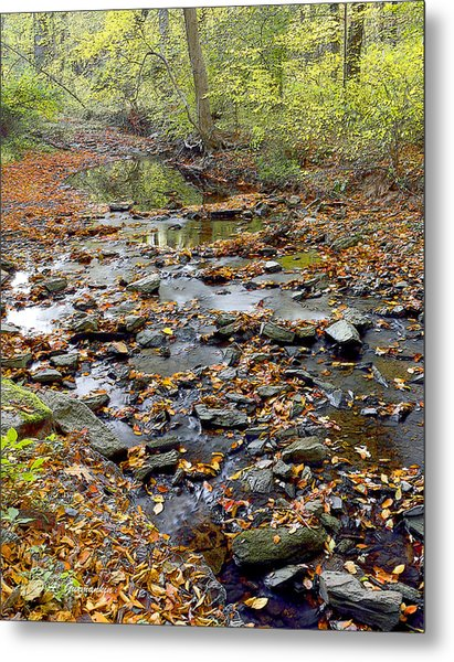 Woodland Brook In Fall Montgomery County Pennsylvania Metal Print