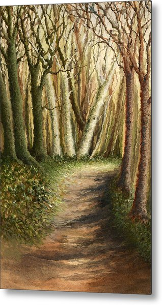 Woodland Walk Metal Print