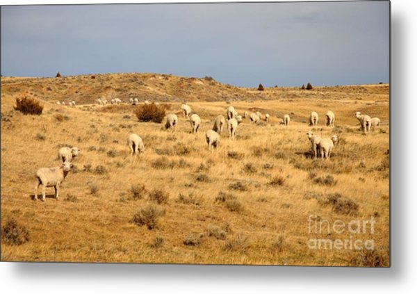 Wool You Sheep With Me Metal Print