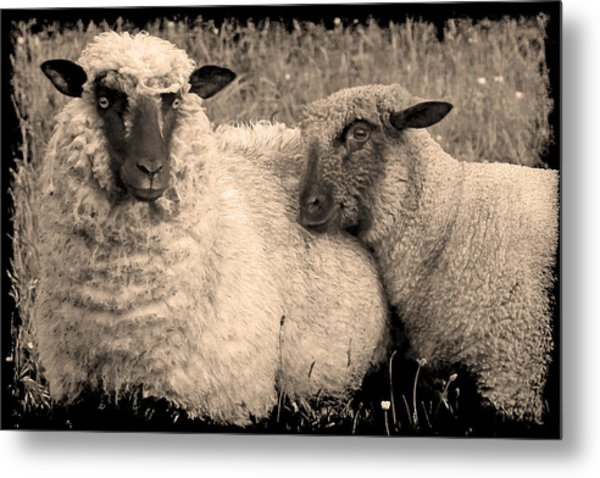 Wooly Love Metal Print