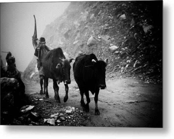 Work Hard Tamang People Langtang Nepal Metal Print