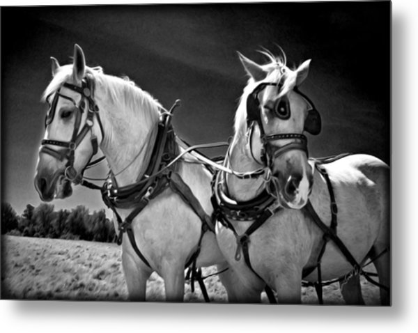 Workhorses Metal Print by Williams-Cairns Photography LLC