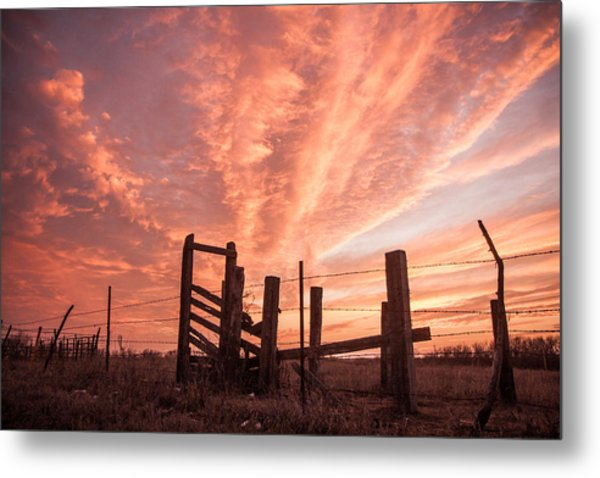 Working Cattle/ End Of Day Metal Print