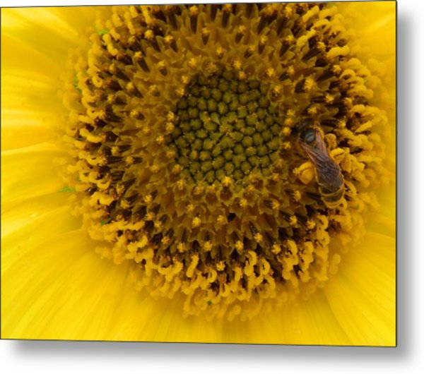 Working Honey Bee Metal Print