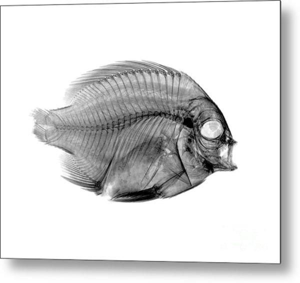 Fish Anatomy Art (Page #5 of 5) | Fine Art America