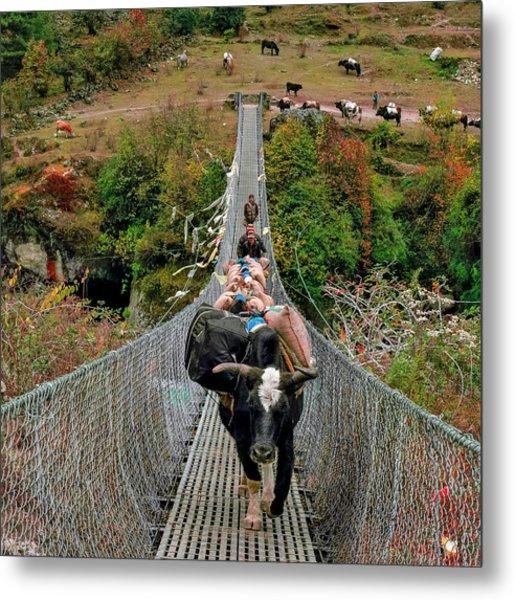 Yaks On Rope Bridge Metal Print