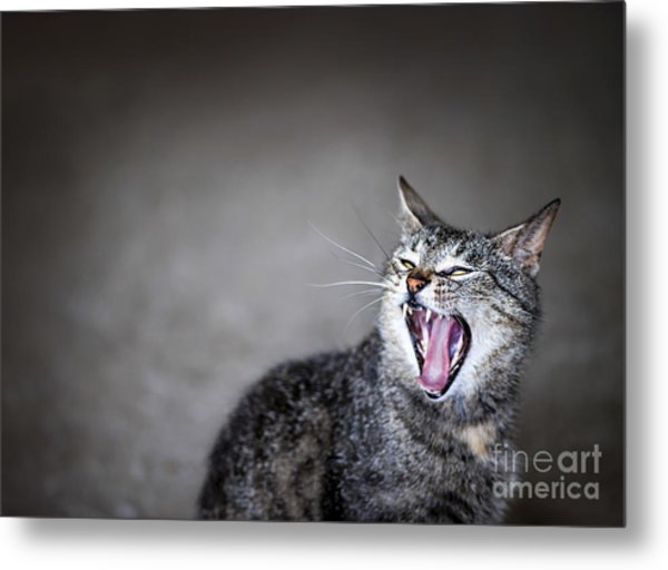 Yawning Cat Metal Print