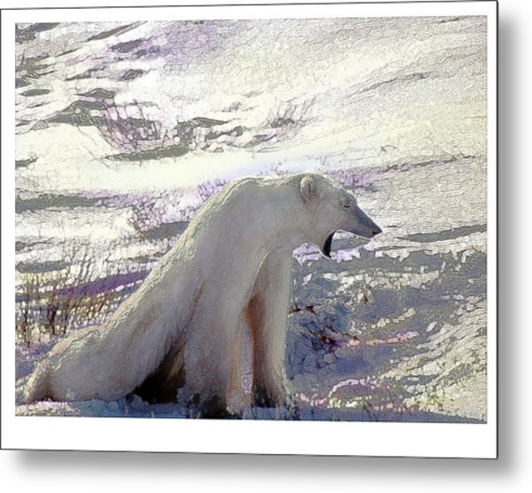 Yawning Polar Bear Metal Print